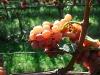 2010-09-24_14-04-31